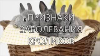 Признаки заболевания кроликов
