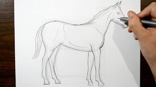 How to Draw a Horse - Real Time Drawing
