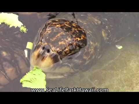 Sea Life Park Hawaii - Tiny TV