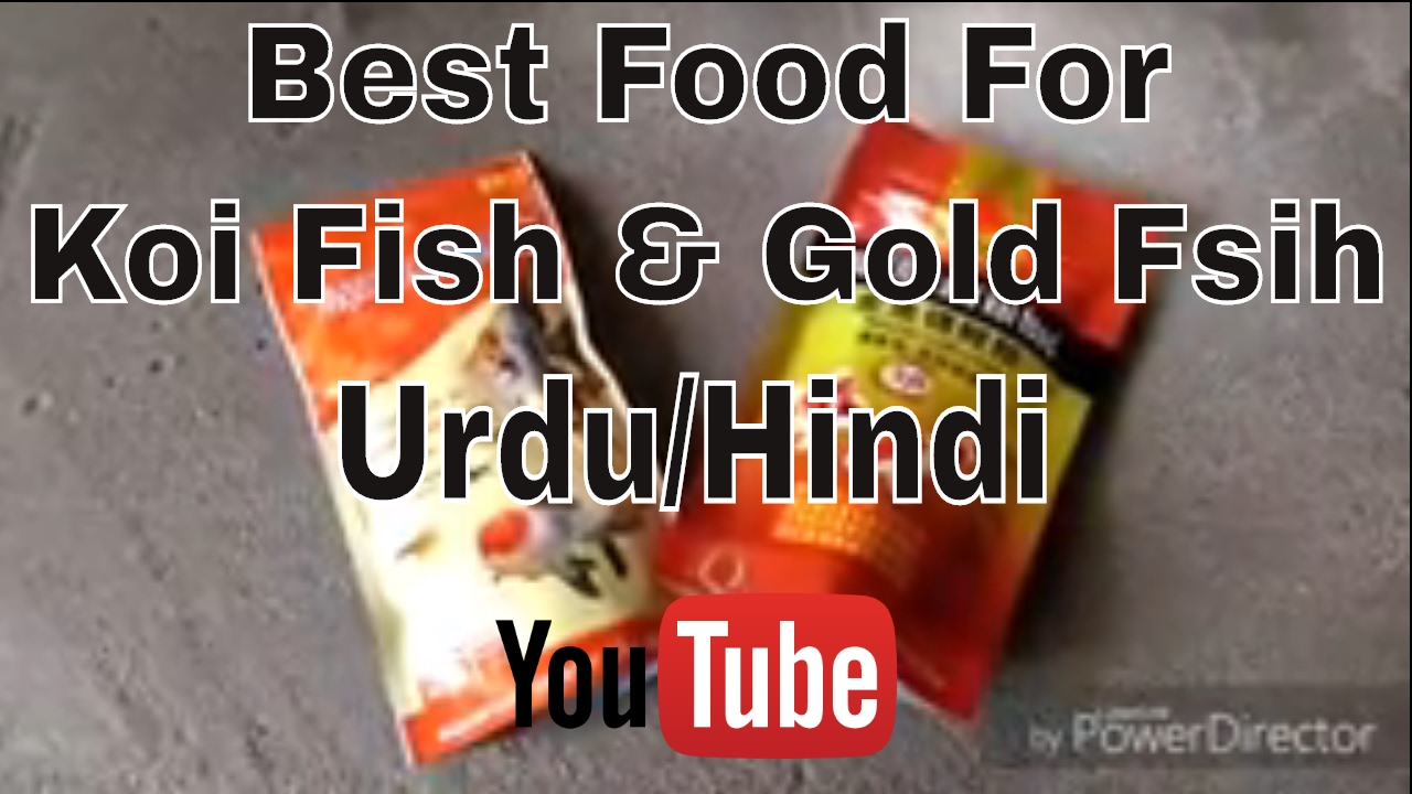 Best food for gold fish koi fish fast growth bright for Best koi food