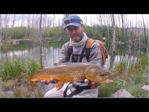 Fly Fishing Alpine Lakes In Southern Utah.