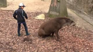 平川動物公園 飼育体験教室(バク)