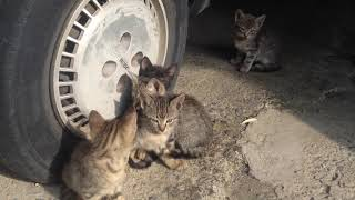 CUTE &  CUDDLY CATS  FUNNY 1