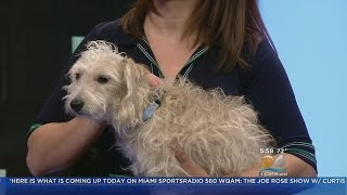 Dogs In The City: Adorable Scout Needs A Home