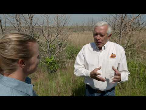 Plant Life After Wildfires in Woods County