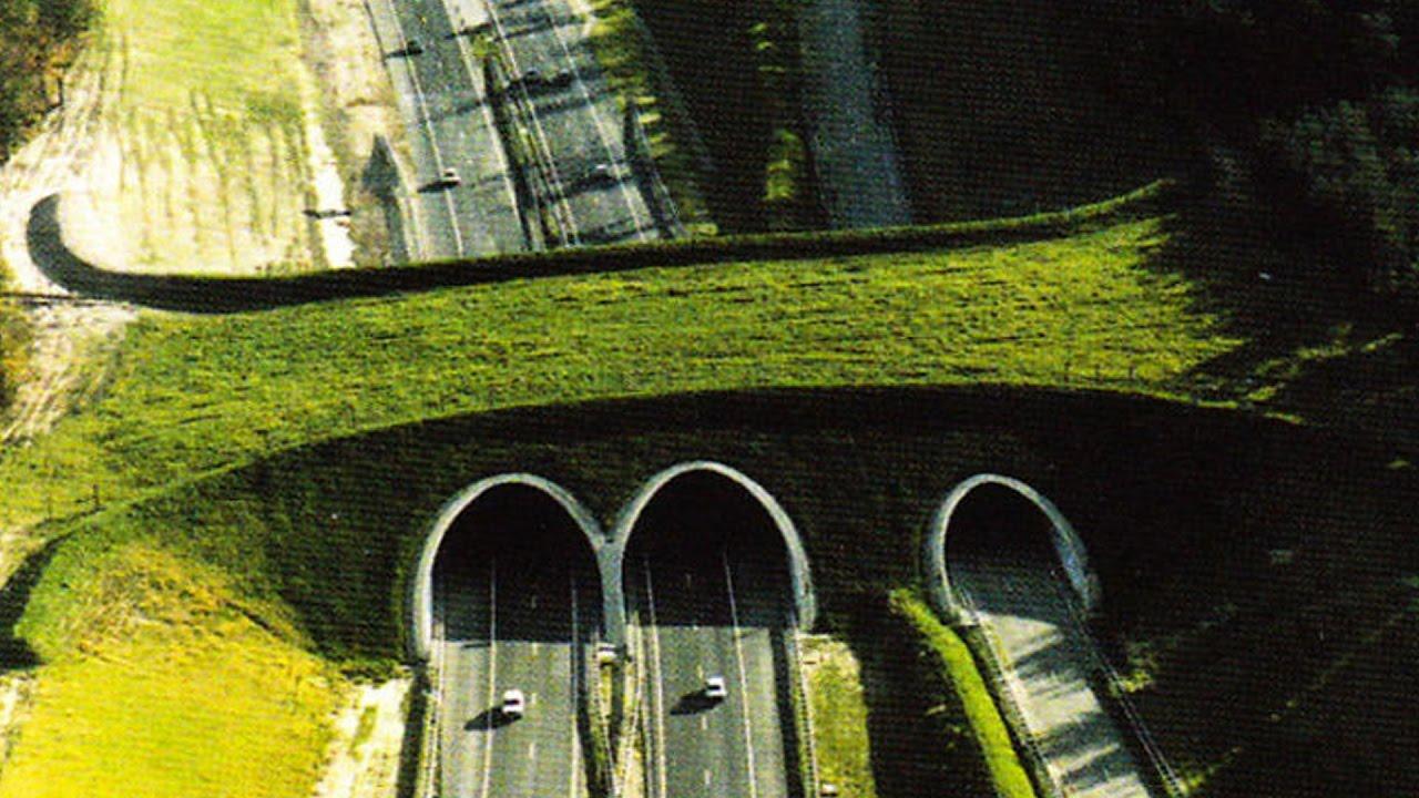 Amazing Animal Bridges and Crossings Around the World   Savings 1000s Of Animals Every Year