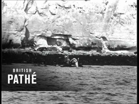 Portuguese Wins Channel Swim (1954)