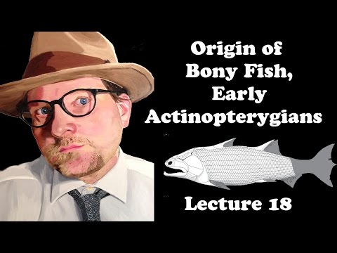 Lecture 18 Origin Of Bony Fish, Early Actinopterygians
