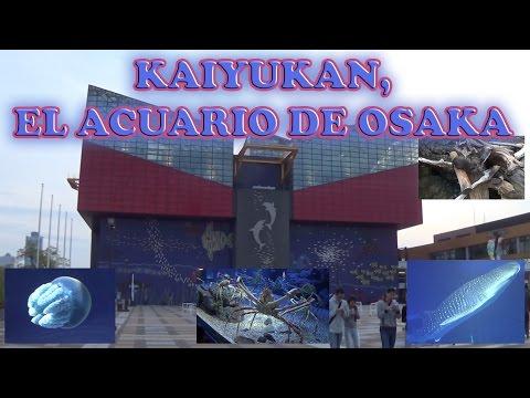 Paseo por el Acuario de Osaka Kaiyukan. Hogar de 2 Tiburones Ballena!!