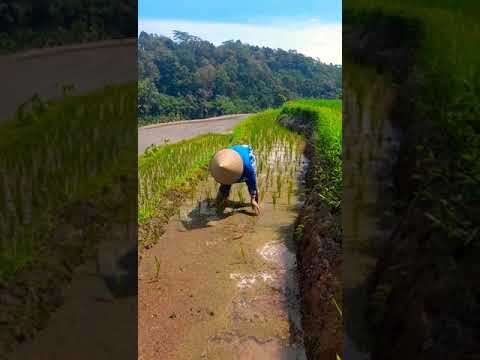 Lembah Dersuni Desa Wisata Branjang Ungaran Barat Shorts Youtube