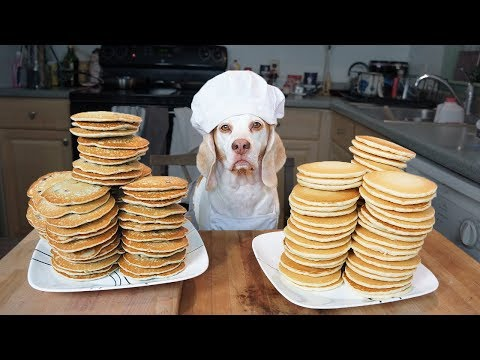 Funny Chef Dog Maymo Makes Pancakes