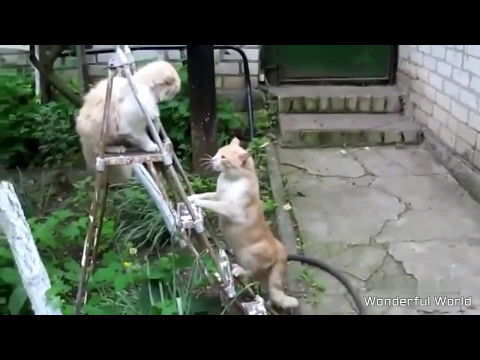 FUNNY CAT COMPILATION 2017   FUNNY CAT VIDEOS PART 5