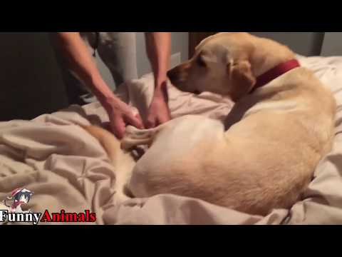 Dog Doesn't Want to Get Out of Bed - Funny Dogs Compilation