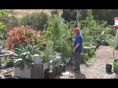 GARDEN TOUR on Plants Growing and Seedlings Vegetables Composting Easy, Early May