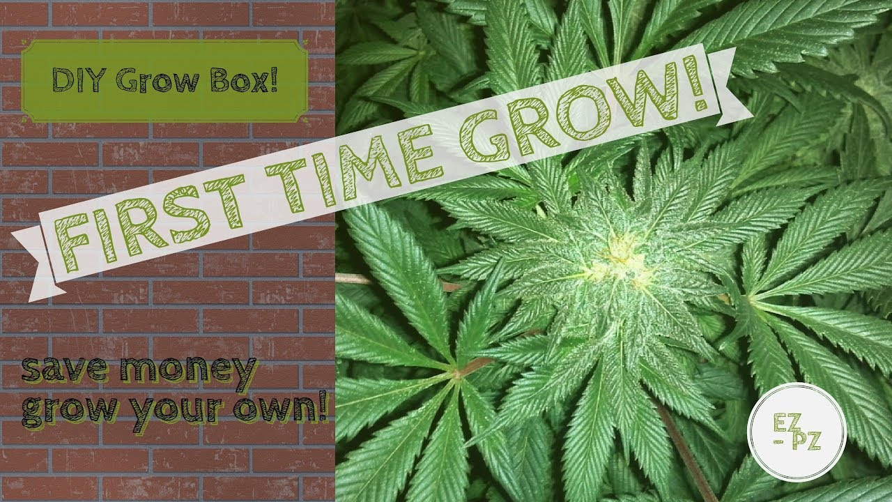 DIY GROW BOX! First Time Growers; build the best grow the best & DIY GROW BOX! First Time Growers; build the best grow the best ... Aboutintivar.Com