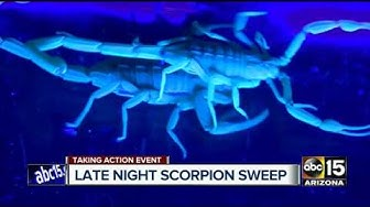 Arizona scorpions: On patrol in one of the Valley's hot zones