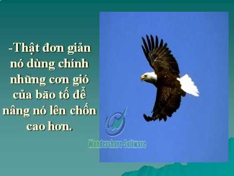 Nhu Canh Chim Dai Bang