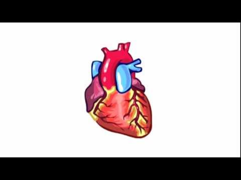 Populair Bouw en werking van het hart - YouTube #AT85