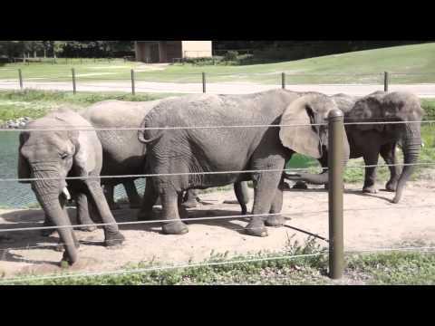 Safari Off Road: Six Flags Great Adventure