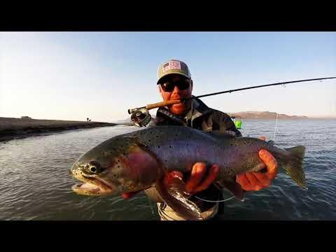 Pyramid Lake Fly Fishing; Chronicles Of Pyramid (Full Version)