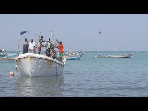 Can Somalia's fishing industry keep pirates out of business?
