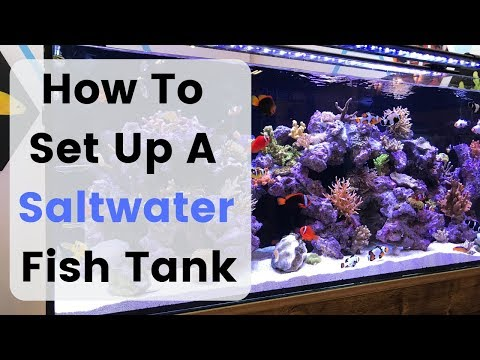 How To Set Up (Build) A Saltwater Fish Tank / Aquarium