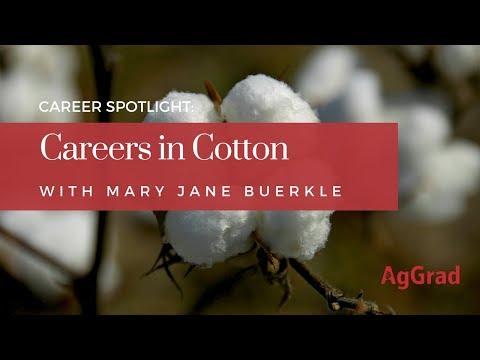 Career Spotlight: Careers in Cotton