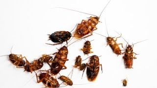 DIY Home Pest Control(CLICK ON THE FOLLOWING LINK TO VIEW MY OTHER VIDEOS ON PEST CONTROL: ..., 2013-10-12T11:00:04.000Z)