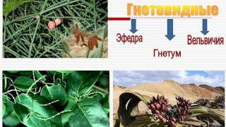 Презентация  Тема 9 Царство Растения  Нисшие и высшие растения