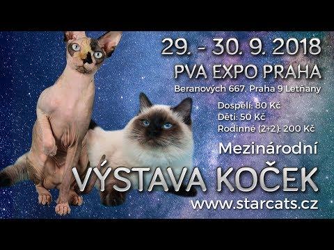 FIFe International cat show – Star Cats Show Prague 29.9.2018.