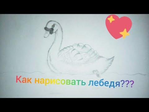 Как нарисовать лебедя. Видео урок как нарисовать лебедя.