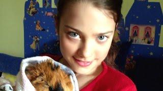 Морская свинка. Guinea pig.(Морская свинка. Свинка очень умная. Это домашнее животное и за ним надо ухаживать: менять подстилку, кормить..., 2016-05-07T22:13:34.000Z)