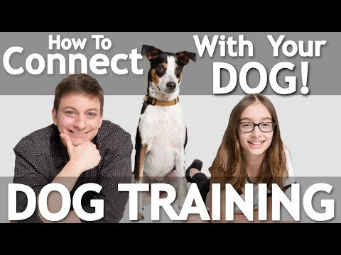 How to Get your Dog FOCUSED During Training!