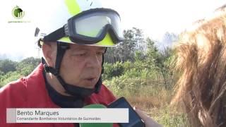 Incêndio florestal ameaçou exploração agrícola e habitações em S. Torcato