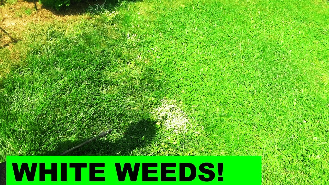The Effects of Tenacity on Weeds