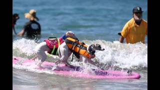 Surf City Surf Dog competition took place at Huntington Beach in California