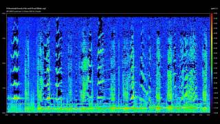 Modern Sonar Sounds and other Sounds of the Sea