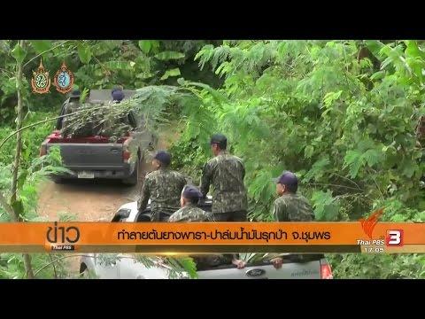 ทำลายต้นยางพารา-ปาล์มน้ำมันรุกป่า จ.ชุมพร