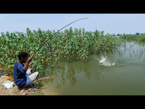 Amazing Big Rohu Fish Catch || Incredible Fishing