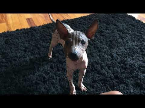 Rare Dog! So much Cuteness