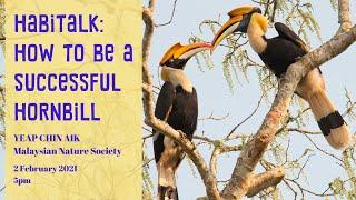 Habitalk: How to be a Successful Hornbill