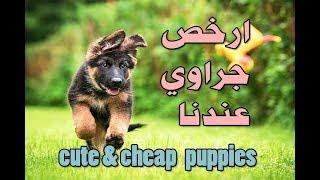 جراوي وكلاب بأسعار معقولة وعروض روعة