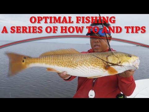 How To Fish The Flats For Redfish, Snook And Trout