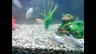 CRAZY FROG & FISH - Funny Video Clip - Breath IN Water