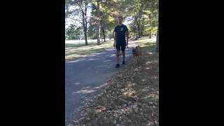 Dog Training Lesson 1 - Italian Mastiff Learns To Heel In One Sesson