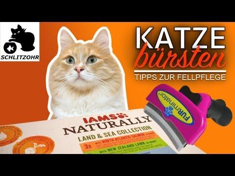 🔥Tipps zum Katze bürsten - worauf achten? FURminator unschlagbar? Mit IAMS NATURALLY schönes Fell?