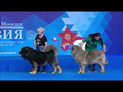 Best Guard Dogs Parade (5 Guard Dog Breeds at Russian Dog Show)