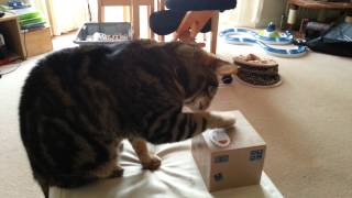 Ocicat Intelligence - Learning to work an electronic piggy bank