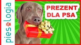 5 prostych pomysłów na prezent dla psa