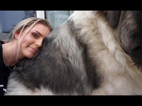 Caucasian Shepherd Cuteness - One of the biggest dogs in the world (Caucasian Ovcharka)